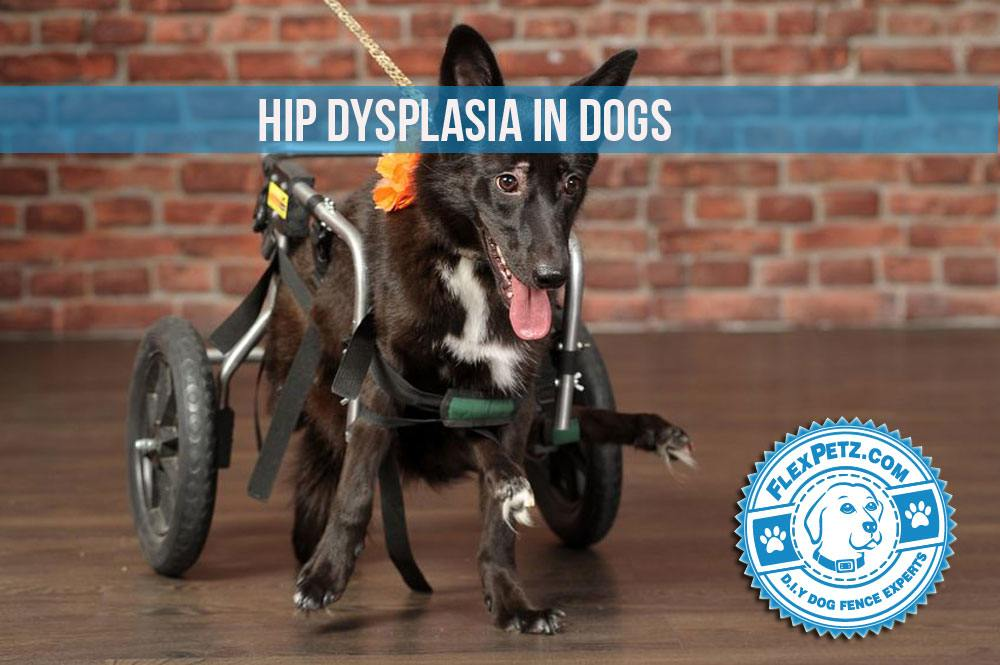 hipdysplasia2