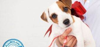 Giving Pets as Gifts: A Good Idea?