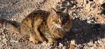 All that You Wanted to Know About Feral Cats