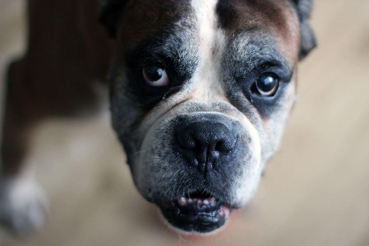 dog-1590377_1280