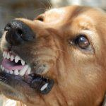 Aggression in Dogs: Causes, Prevention, & Treatment