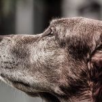 What You need to Know about Arthritis in Dogs