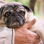 Kennel Cough: Prevention, Symptoms, & Treatment
