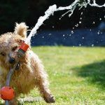 Heat Stroke in Dogs