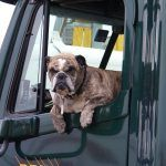 Heat Exhaustion: The Danger of Leaving Pets in a Parked Car