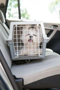 crate training for car travel