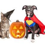 10 Halloween Safety Tips for Pets and Their Owners
