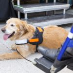 Getting a Service Dog Vest for Your Dog