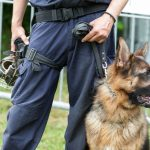 Police Dogs: Partners in Justice