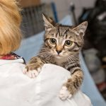 Everything You Need to Know Before Fostering Cats