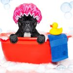 DIY Dog Grooming: What You Need to Know