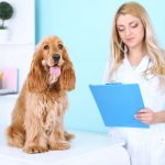 Dog UTI Treatment: What You Should Know