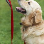 How to Train Your Dog on an Electric Dog Fence