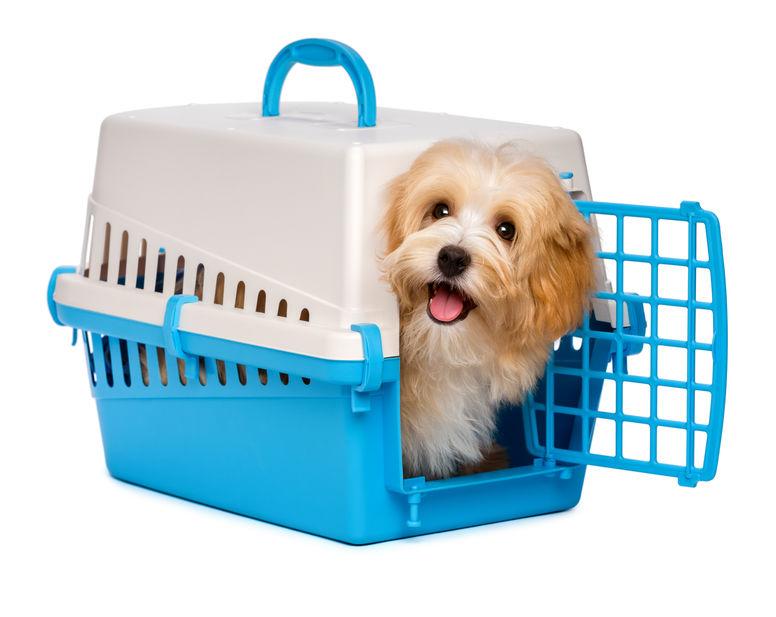 A puppy inside a crate