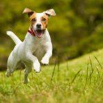 Do Electric Dog Fences Really Work?