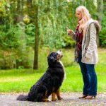 The Essential Dog Training Commands List