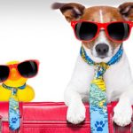 Best Airline-Approved Pet Carriers