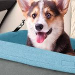The Best Dog Booster Seats of 2019