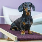 The Best Dog Ramps of 2019