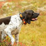 Best GPS Tracker for Dogs in 2019