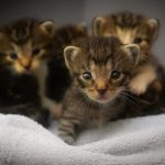 How to Care for a Kitten: The Basics