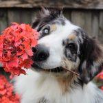 Planting a Pet-Friendly Garden