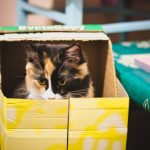 Why Do Cats Like Boxes? (and Other Strange Cat Behaviors)