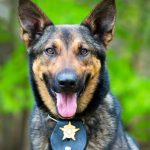 The Working Dog Group - Bred for a Purpose