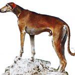 Azawakh: The Ancient Dog Breed of Northwest Africa
