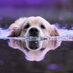 7 Dogs That Love to Swim