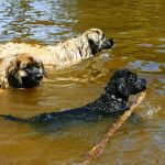 What Dogs Have Webbed Feet?