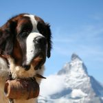 Dog Breeds of Switzerland