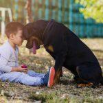 Breed Spotlight: Rottweiler