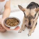 What to Feed Your Dog When They Are Sick