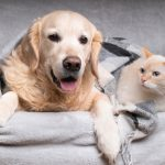 Cold Safety for Dogs