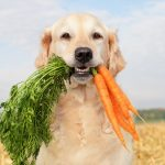 How to Safely Feed Your Dog Greens
