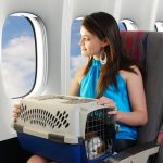 Preparing Your Dog for Air Travel