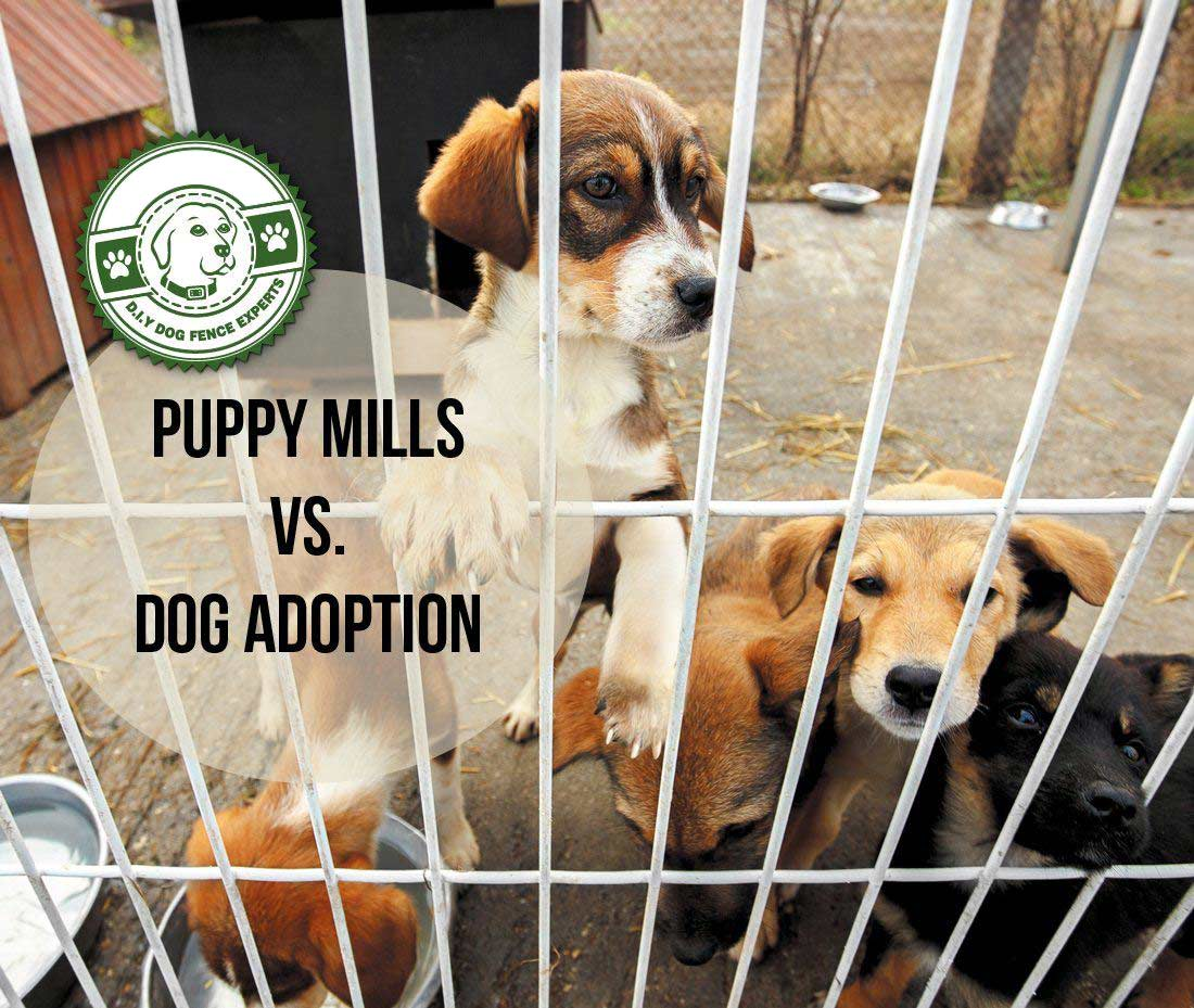 Five little puppies behind bars in a dogs shelter