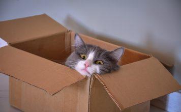 Cat sitting in a box