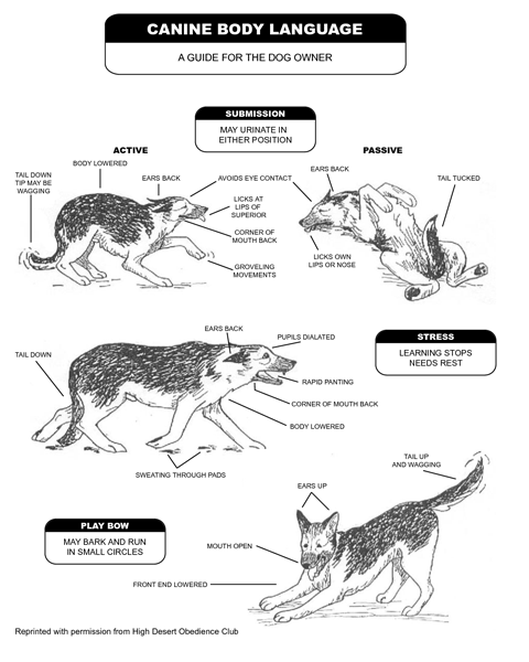 Canine Body Language and Signs of Stress
