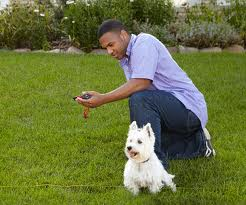 test your dog fence collar at the invisible fence perimeter