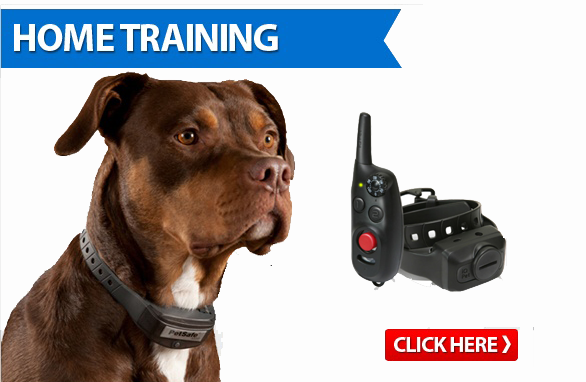 Dog Remote Trainers