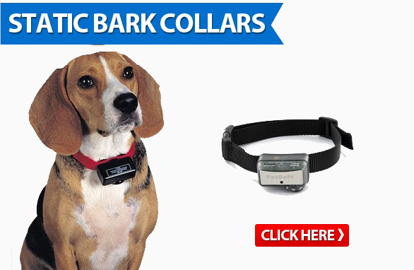 static bark collars
